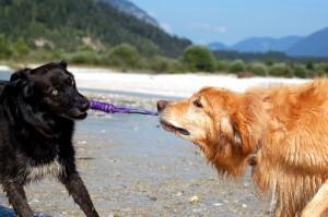 Daran haben Hunde so richtig Spaß - eine echte Alternative zum Stöckchen.